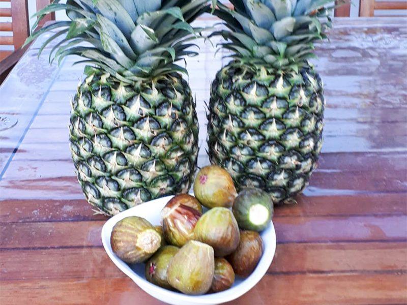 Gudes-Zeich - Ananas-Feige